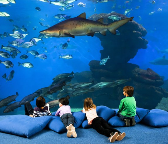 Sharks of palma aquarium, Mallorca