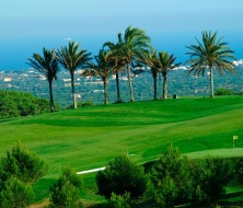 Golf and palm trees majorca